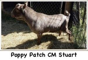 Photo courtesy of Goldenwood Farm, Canby, Oregon